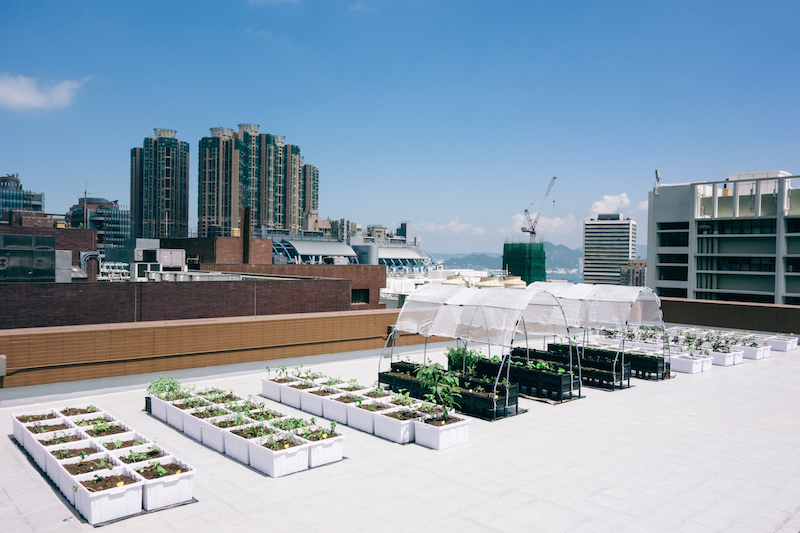 Copy of hku rooftop farm